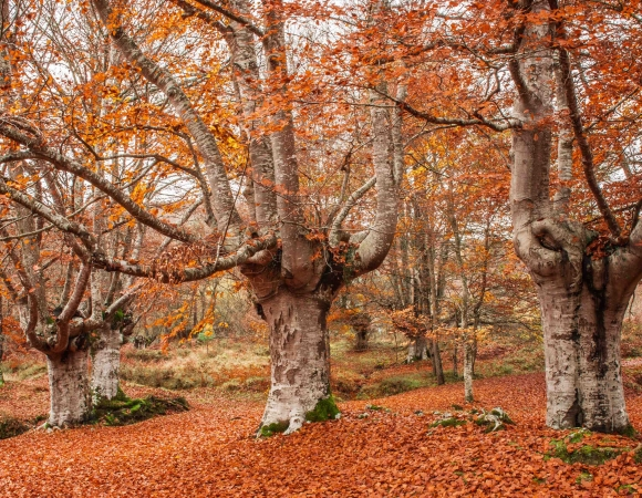 The Natural Parks of Bizkaia